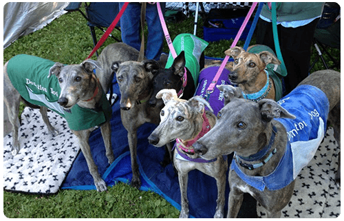 GPA Indy Greyhound Adoption